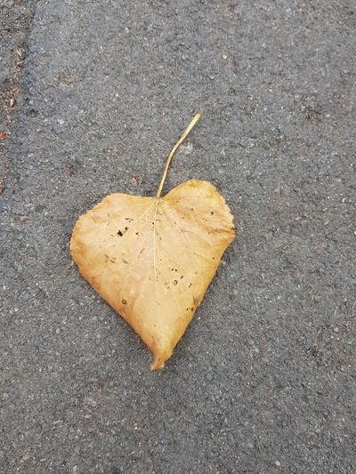 Love comes in