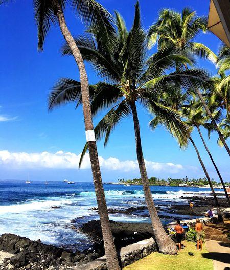 Kona Hawaii Palm Tree Beach Ocean Beauty In Nature Kona Hawaiishots Nature Outdoors