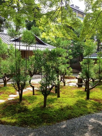 The Purist (no Edit, No Filter) Japanese Garden Trees Green
