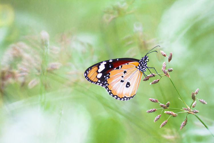 Animal Markings Animal Themes Animal Wildlife Animals In The Wild Beauty In Nature Butterfly Butterfly - Insect Close-up Day Flower Head Fragility Freshness Growth Insect Leaf Nature No People One Animal Outdoors Plant Spread Wings
