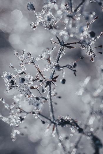 Winter Cold Temperature Snow Frozen Plant Beauty In Nature Branch Nature Close-up No People Ice Fragility Vulnerability  Freshness White Color Focus On Foreground Extreme Weather Outdoors Frozen Nature Ice Crystal Bush Day