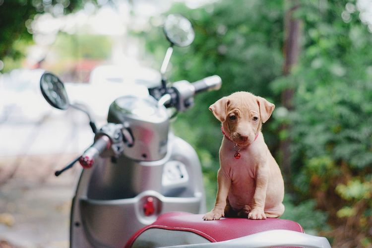 Cute puppy sitting on motorcycle