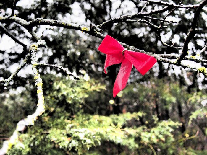 Trees Winter Trees Ribbon Dallas