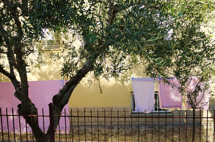 Pink clothes in the garden Green Green Color The Week On EyeEm Tranquility Tree Branch Close-up Cloth Clothes Clothesline Day Garden Nature No People Outdoor Outdoors Prison Sky Tree