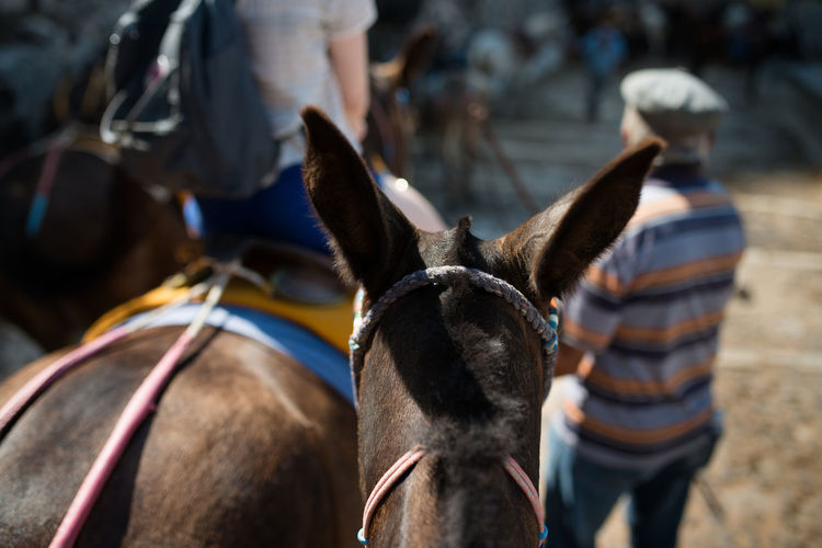 Rear view of people with donkey