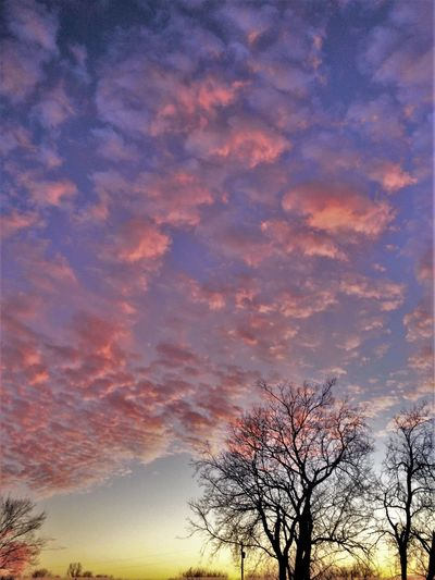 The calm before the storm Beauty In Nature Branch Cloud Cloud - Sky Cloudy Dramatic Sky Low Angle View Nature Oklahoma Outdoors Scenics Sky Sunset Tranquil Scene Tranquility Tree Nature's Diversities