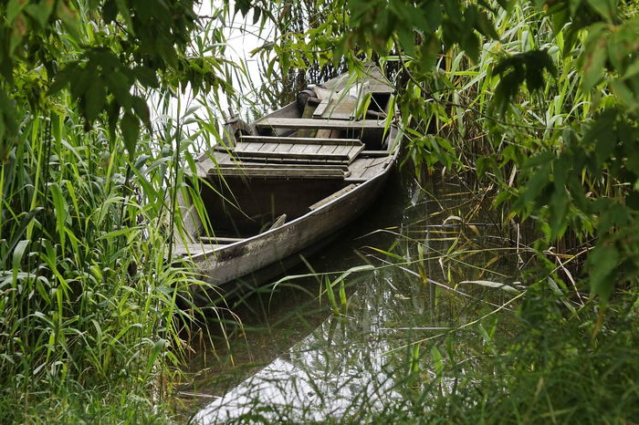 Beauty In Nature Boat Day Grass Green Color Growth Mode Of Transport Moored Nature Nautical Vessel No People Outdoors Plant Transportation Water