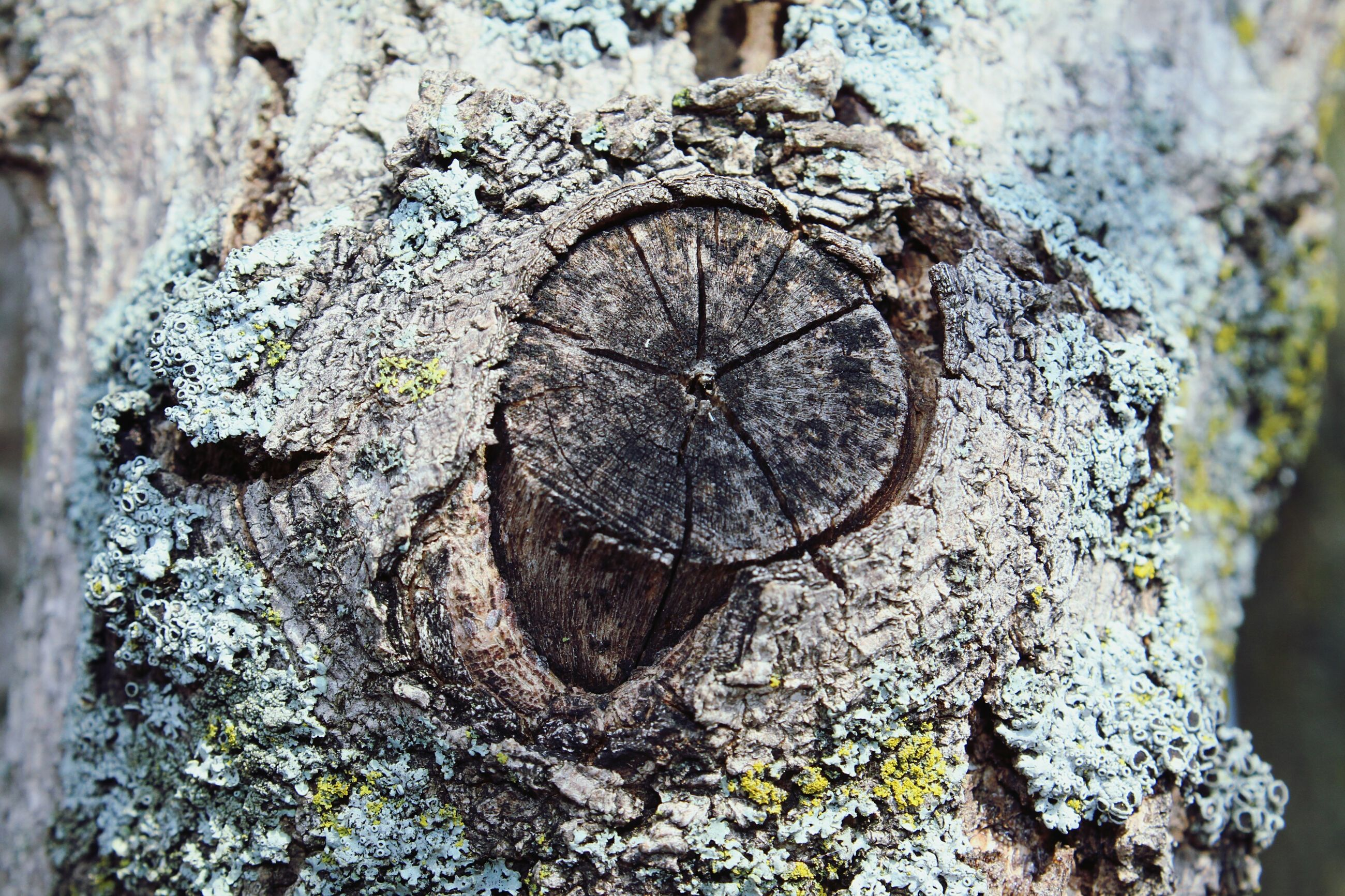 textured, close-up, tree trunk, rough, weathered, tree, old, circle, hole, focus on foreground, wood - material, nature, day, no people, damaged, outdoors, bark, pattern, selective focus, detail