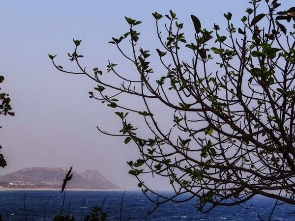 A SCENIC BEAUTY Tree Water Sea Branch Nature No People Beauty In Nature Mountain Sky Day Bird Outdoors