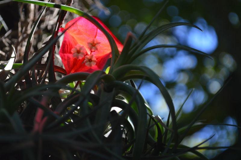 Flower lit up