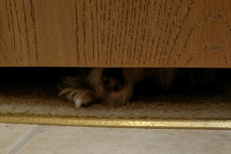 From My Point Of View Stalker Stalkermode Busted! Never Alone My Dog Peeping Tom Seperation Issues Peek-a-boo Are You In There? FUNNY ANIMALS Funny Pets Funny Pictures