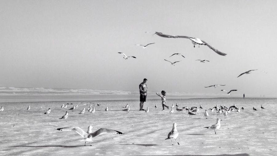 IPSMinimalism Beach,man,child,birds,ocean,