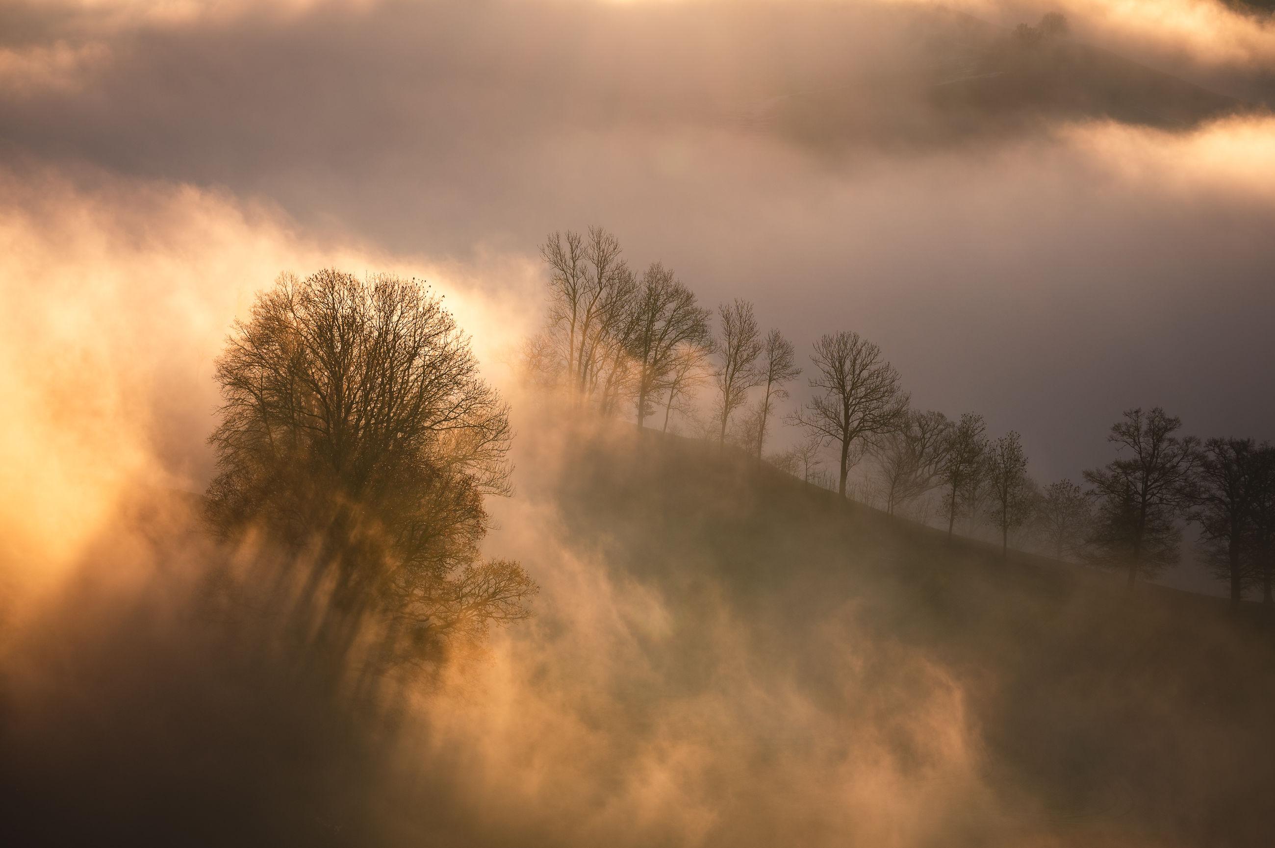 mist, tree, morning, cloud, fog, environment, sky, plant, beauty in nature, nature, landscape, sunrise, scenics - nature, dawn, sunlight, forest, land, sun, tranquility, no people, sunbeam, tranquil scene, outdoors, non-urban scene, atmospheric mood, twilight, dramatic sky, idyllic, orange color, back lit, light - natural phenomenon, silhouette, cloudscape, woodland, darkness