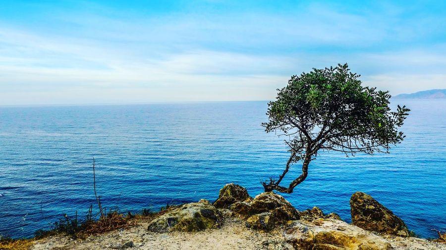 Tree on shore against horizon