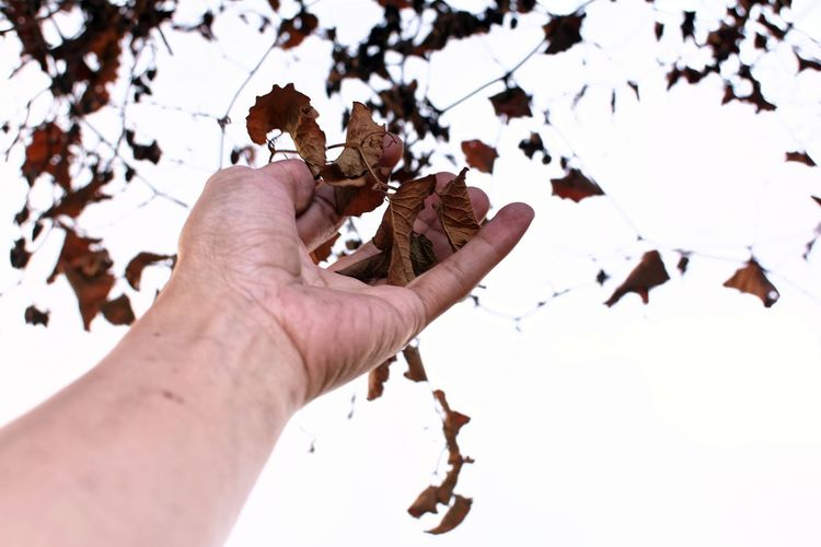 Low angle view of hand touching dried leaves against sky
