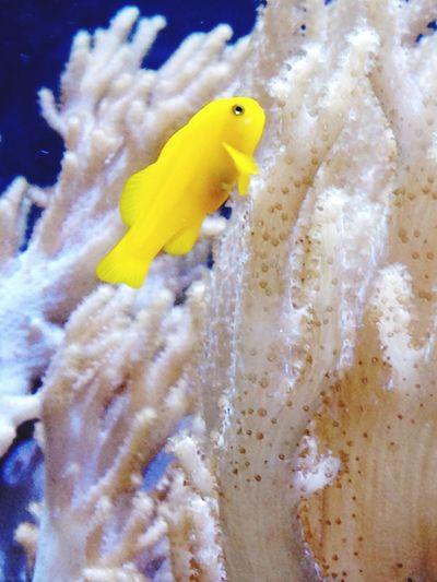 Chester zoo aquarium 🐟 Fish Zoo