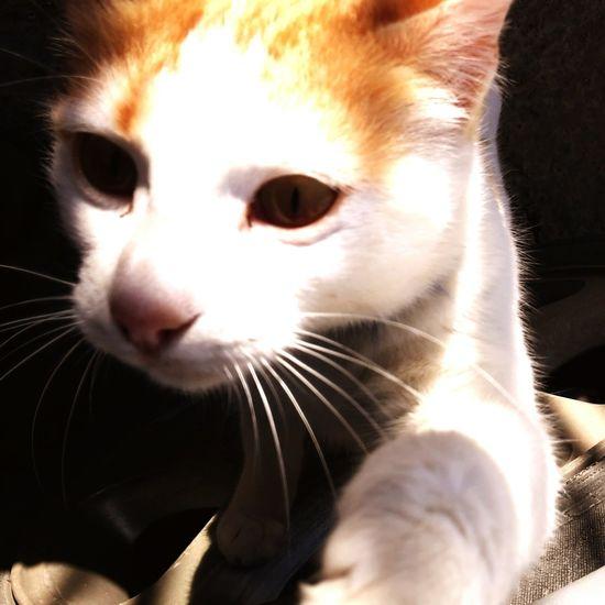 Cat Lovers Cat♡ Cat my ?