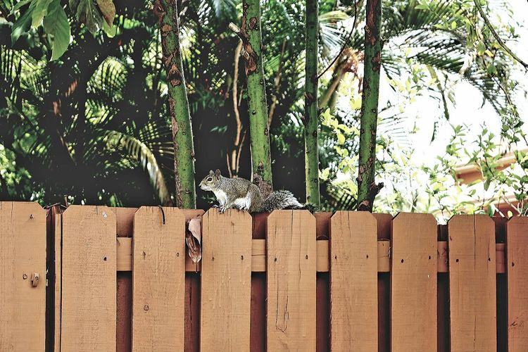 Side view of squirrel on fence