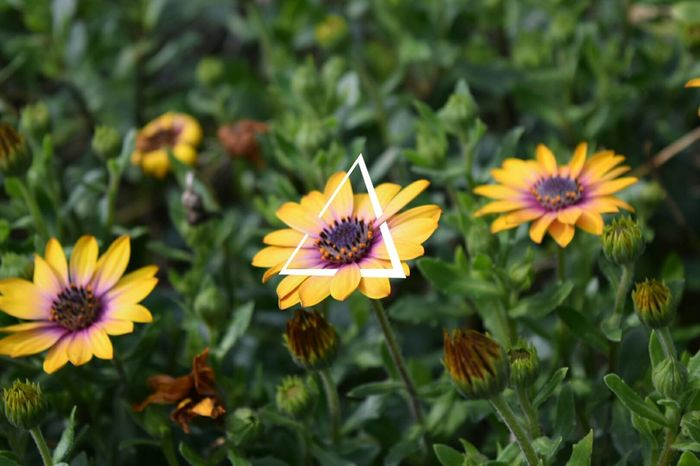Cut And Paste Flower Plant Yellow Nature Insect Flower Head Petal Tranquility Summer Day Outdoors High Angle View Focus On Foreground Close-up No People Fragility Leaf Awe Beauty In Nature Multi Colored Break The Mold TCPM Art Is Everywhere EyeEmNewHere