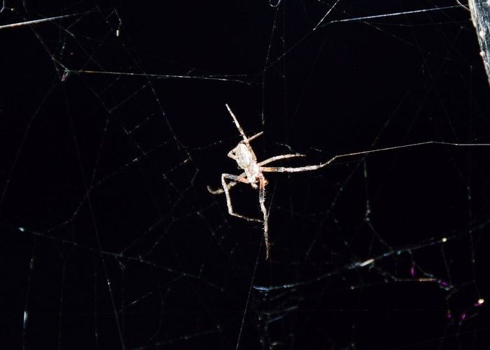 Spider Web Spider One Animal Animal Wildlife Close-up Animal Themes Animals In The Wild No People Nature