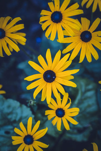 Close-Up Of Yellow And Daisy Flowers