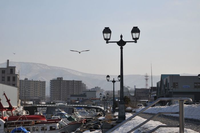 Thaw of the canal Thaw Canal Bird Gull Boats My Town Otaru Canal Street