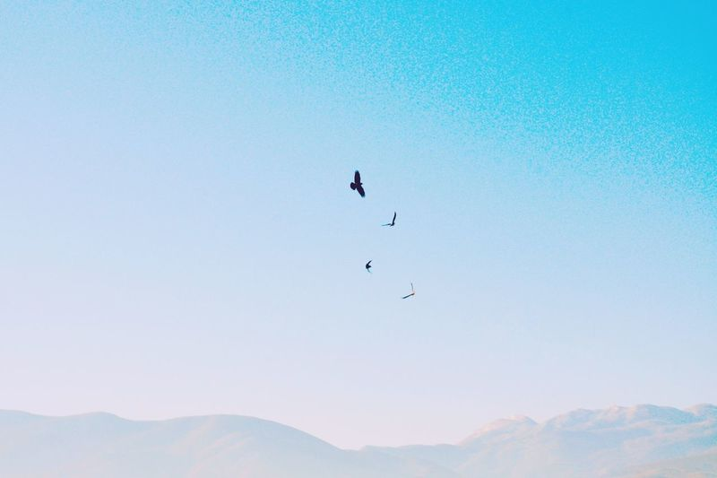 Bird Mountain Animals In The Wild Flying Animal Wildlife Animal Themes Nature Scenics Outdoors Beauty In Nature One Animal Day No People Clear SkySky Polaroid A New Perspective On Life