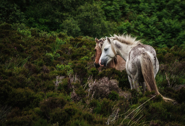 First Eyeem Photo Nature Canon450d Canon_photos Canon_official Canonphotography Canon Ireland🍀 Green Wildlife Wildlife & Nature Wild Animal Horses Horse Photography  Horselove Love Brown White White Horse Freedom Free Together Captured Moment Capture The Moment