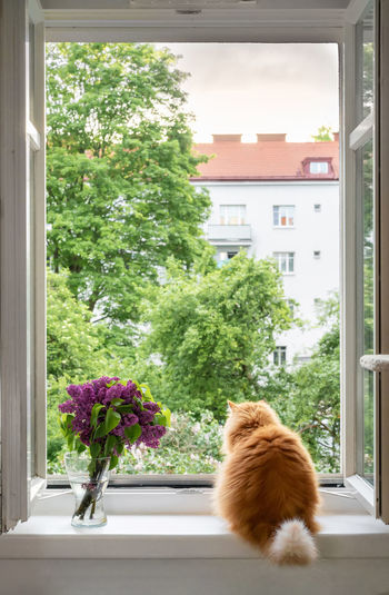View of cat looking through window