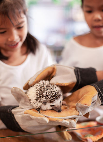 Cropped Hands Giving Hedgehog To Girl