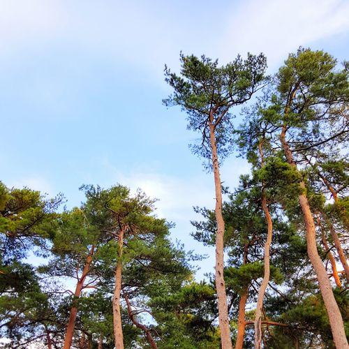 그립다 여름 Summer ❤ Miss Long For Memories Tree Blue Nature Growth No People Day Sky Outdoors Peace Peaceful View