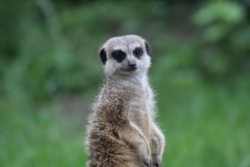 Burgers Zoo Zoo Animals  Photography Animal Beauty In Nature Canonphotography Canon EOS 1300D