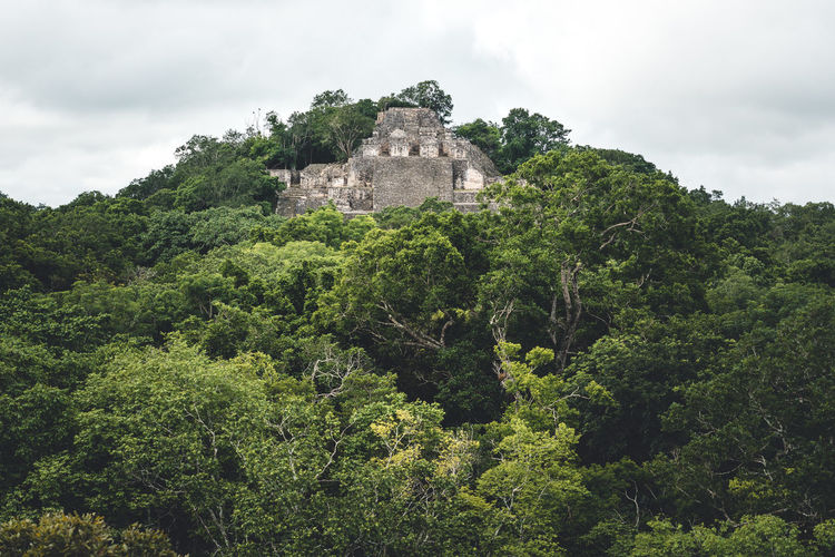 Architecture Tree Built Structure Plant Building Exterior Growth History Green Color The Past Building Nature Land Lush Foliage Foliage Day Travel Travel Destinations No People Mountain Ancient Outdoors Ancient Civilization Maya Mayan Ruins Mexico