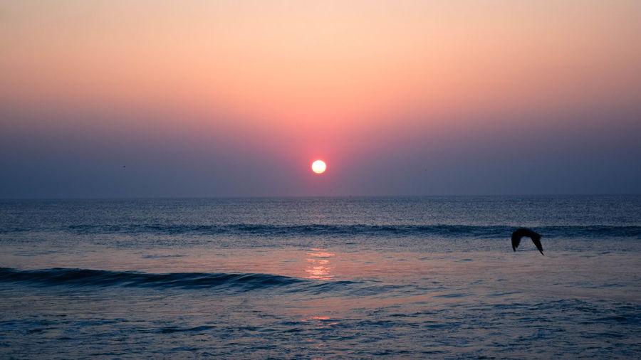 Silhouette bird flying against sunset sky