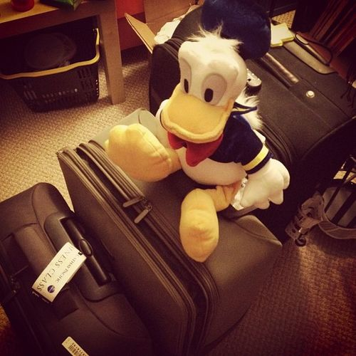 All packed. Donald is coming back to 852 with me ?? Fuckfinals Home HongKong Cathay christmas