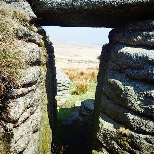 Dartmoor Nature
