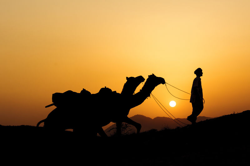 Woman leading two camels at sunset
