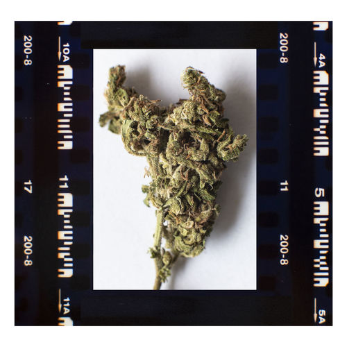 Marijuana Weed Bud on film frame. Healthcare And Medicine Marijuana - Herbal Cannabis Indoors  No People Narcotic Close-up Studio Shot Transfer Print Plant Auto Post Production Filter Medical Cannabis Arts Culture And Entertainment High Angle View Text Recreational Drug Crime Directly Above Cannabis Plant Social Issues Film Industry Annual Event Thc CBD