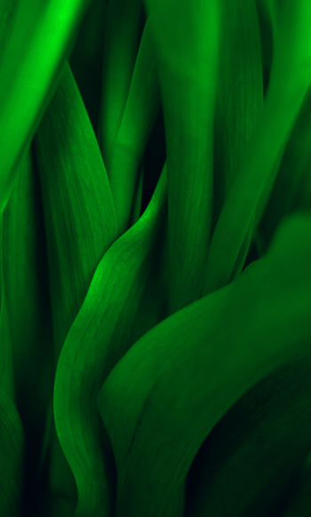 Colour Expressions #27 Plant Green Color Plant Part Leaf Growth Close-up Nature Beauty In Nature Freshness Extreme Close-up Pattern Vegetable Abstract Tulip Tulips Stem Stalk EyeEmNewHere