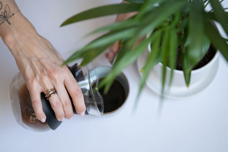 Close-up of woman hand holding plant