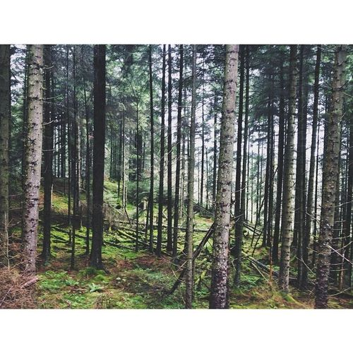 Grizedale Forrest, less than a mile away from work. Forrest Grizedale Livemoreyha Hawkshead