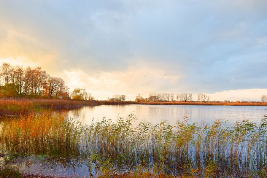 Evening Light Linum Linumer Teichlandschaft Beauty In Nature Cloud - Sky Day Evening Sky Grass Idyllic Lake Landscape Nature Naturelovers No People Outdoors Plant Reflection Scenics Sky Sunset Tranquil Scene Tranquility Travel Destinations Tree Water