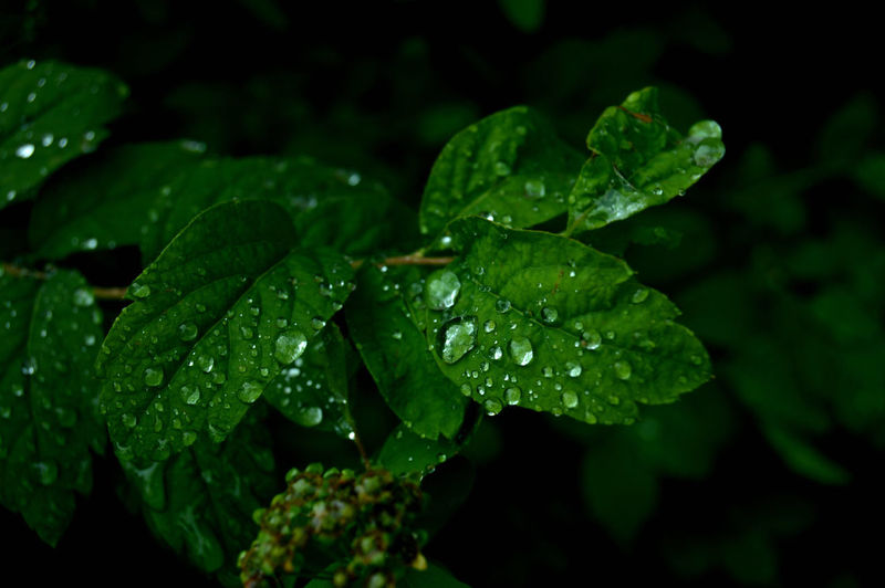 :) EyeEm Selects EyeEmNewHere Beautiful Autumn Summer Drop Wet Water Leaf Plant Part Plant Growth Green Color Close-up Freshness Beauty In Nature Nature Rain No People Day Outdoors Dew RainDrop Leaves Purity