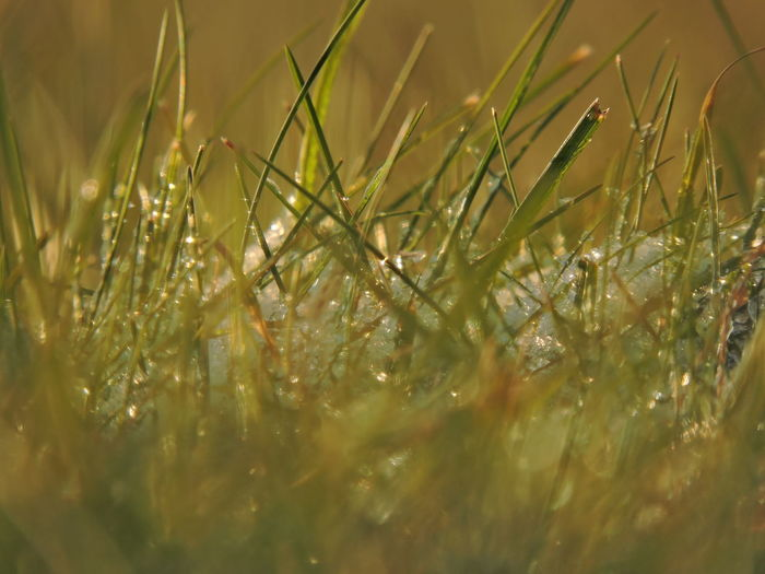 Close-up of dew on grass