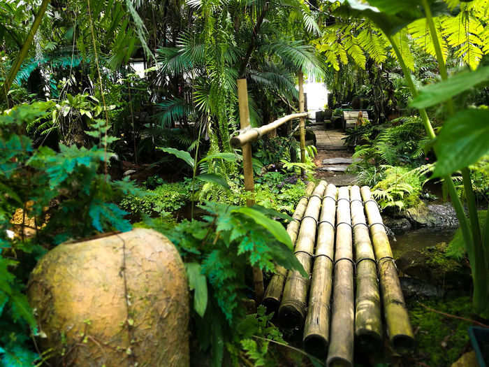 Bamboo Day Forest Green Color Growth Leaf Nature No People Plant Plant Part Tree Water