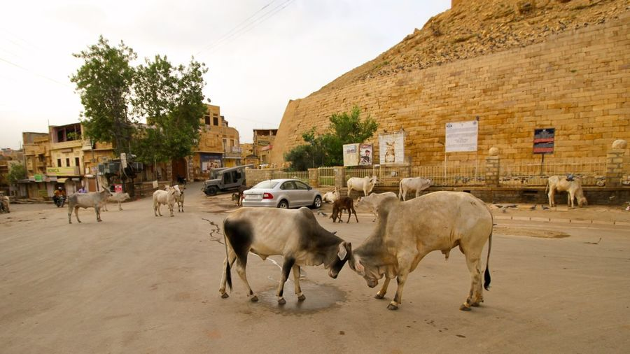 Connected By Travel Morning Clash Jaisalmer Fort Golden Fort Traveling Street