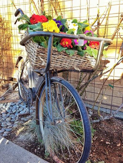 Bycicles Winecountry