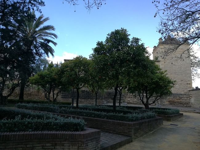 Jerez De La Frontera Jerez De La Frontera, Spain EyeEmNewHere Tree Water Agriculture Sky Landscape Plant Horticulture Cultivated Land Florist Cultivated Agricultural Field Plantation