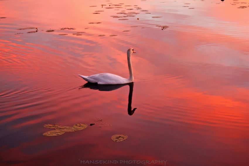 Evening mood EyeEmBestPics EyeEm Best Shots Nature Collection EyeEm Nature Lover Sunset Silhouettes The Moment - 2015 EyeEm Awards