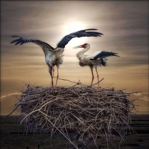 Birds flying over nest